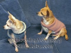 Two little dogs, two little sweaters