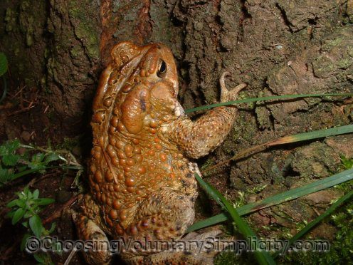 toad climbing tree