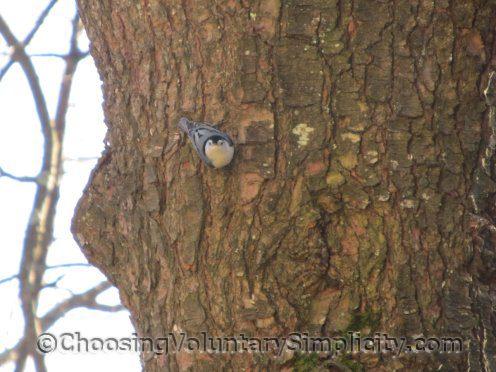 Acerca de Suet y por qué las aves silvestres lo necesitan